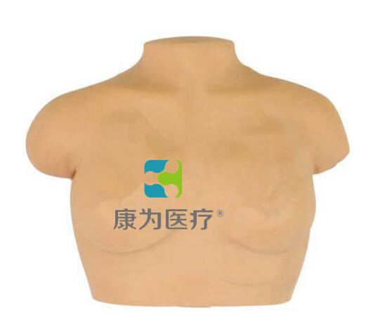"""""""万博体育app登陆医疗""""高级乳房按摩模型,乳房按摩模型"""