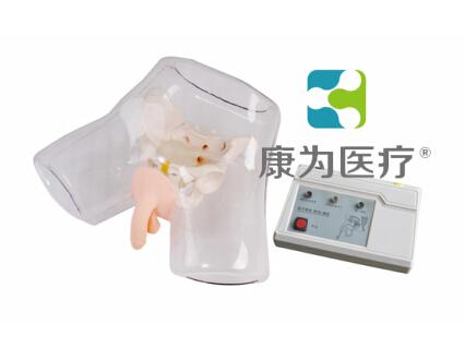 """""""康为医疗""""透明男性电子导尿模型"""