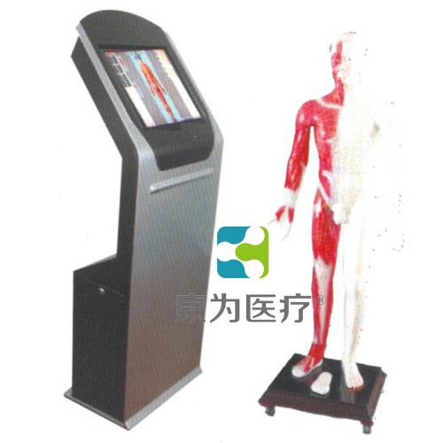 """""""万博体育app登陆医疗""""多媒体人体针灸穴位交互数字平台"""
