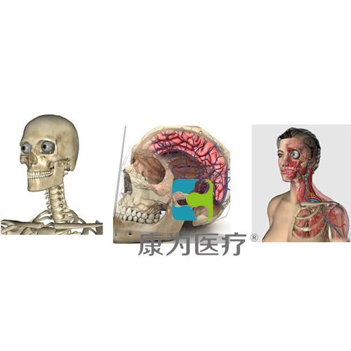 """""""万博体育app登陆医疗""""3D三维人体解剖系统"""