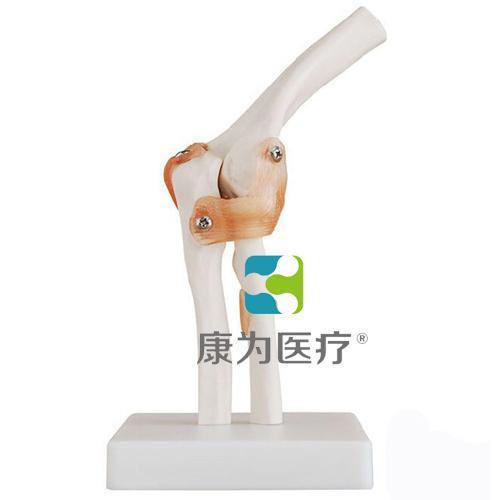 """""""康为医疗""""肘关节附韧带模型"""