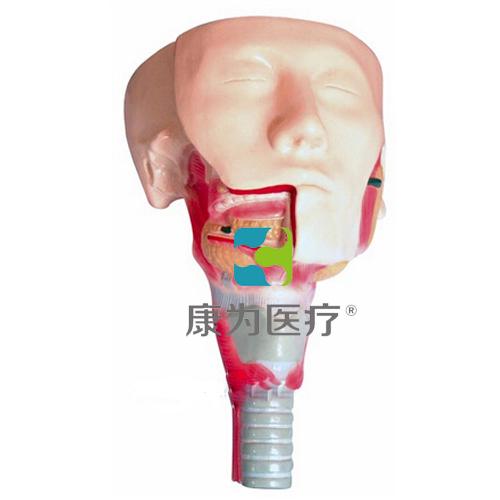 """""""万博体育app登陆医疗""""唾液腺及咽肌解剖模型"""
