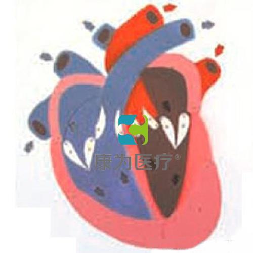 """""""康为医疗""""心脏收缩、舒张与瓣膜开闭演示模型"""