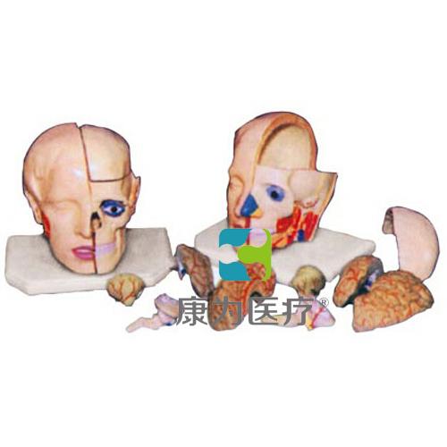 """""""康为医疗""""头解剖附脑模型(10部件)"""