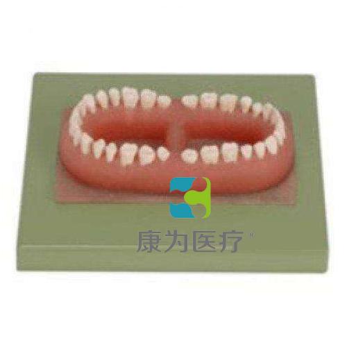 """""""万博体育app登陆医疗""""成人牙模型总汇(32颗牙)"""