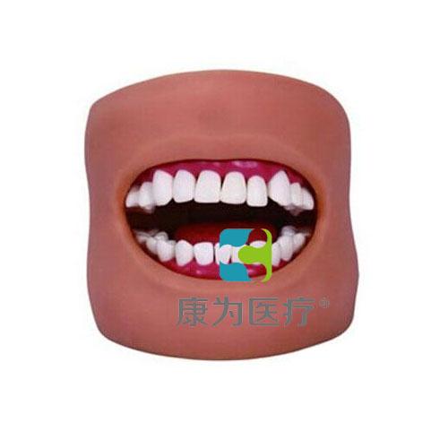 """""""万博体育app登陆医疗""""牙护理保健模型(带脸颊)"""