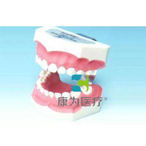 """""""万博体育app登陆医疗""""刷牙指导模型(乳牙)"""