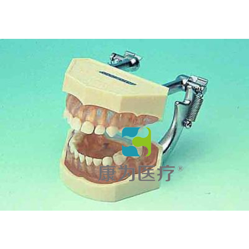 """""""万博体育app登陆医疗""""可拆乳牙颌模型"""
