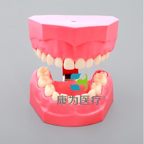 """""""万博体育app登陆医疗""""儿童刷牙模型"""