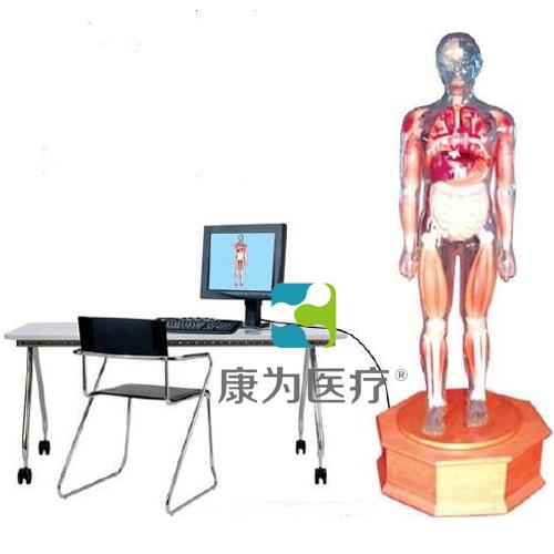 """""""万博体育app登陆医疗""""多媒体解剖学教学综合模拟示教人"""