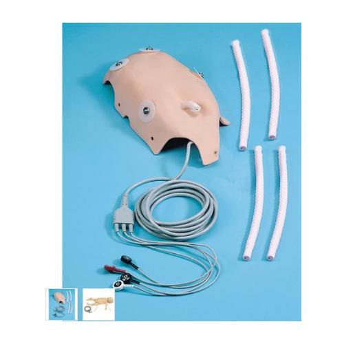 德国3B Scientific®ECG/脐静脉插管皮肤