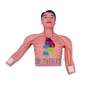 """""""康为医疗""""PICC介入训练模型"""
