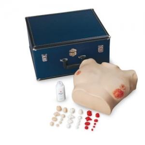 德国3B Scientific®高级胸部检验模型
